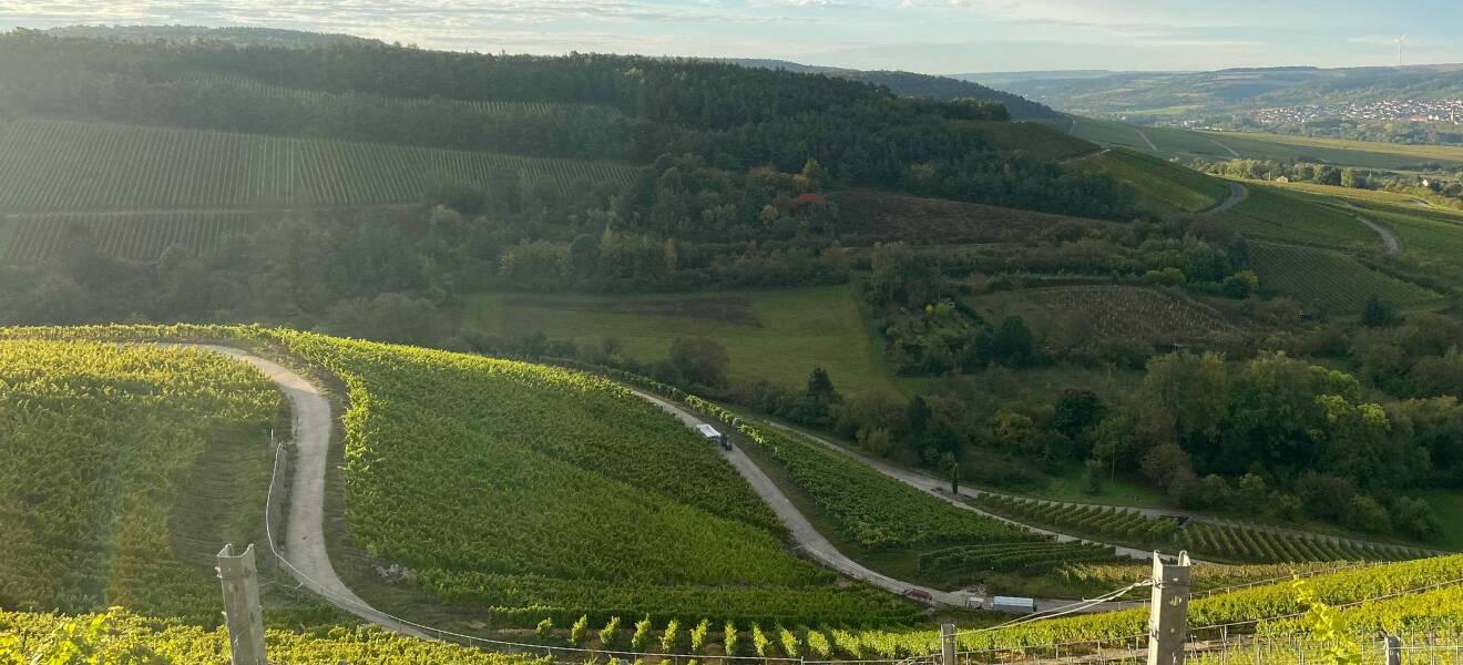 Korbus Wine