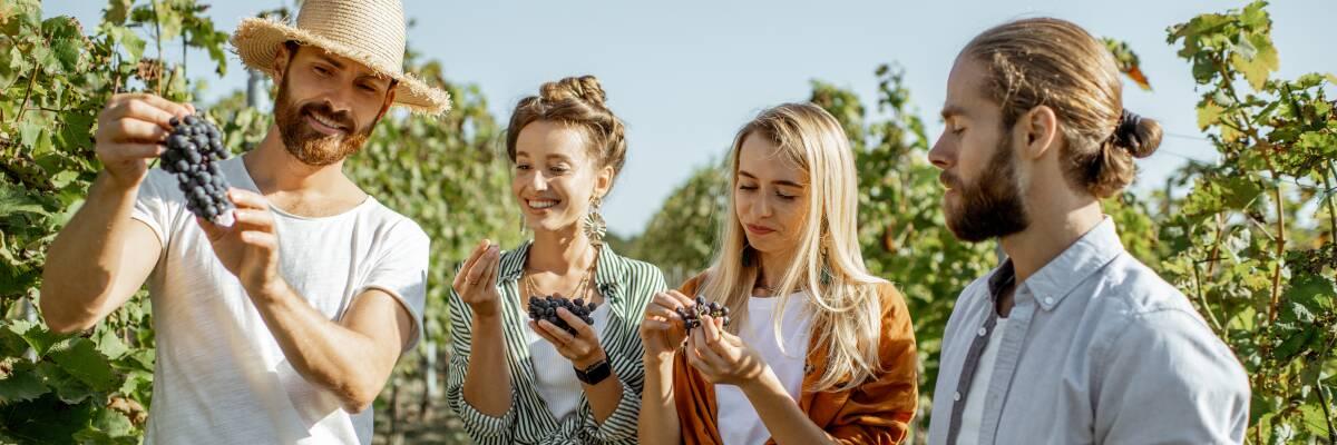 Weinwanderungen: Natur & Kultur im Einklang