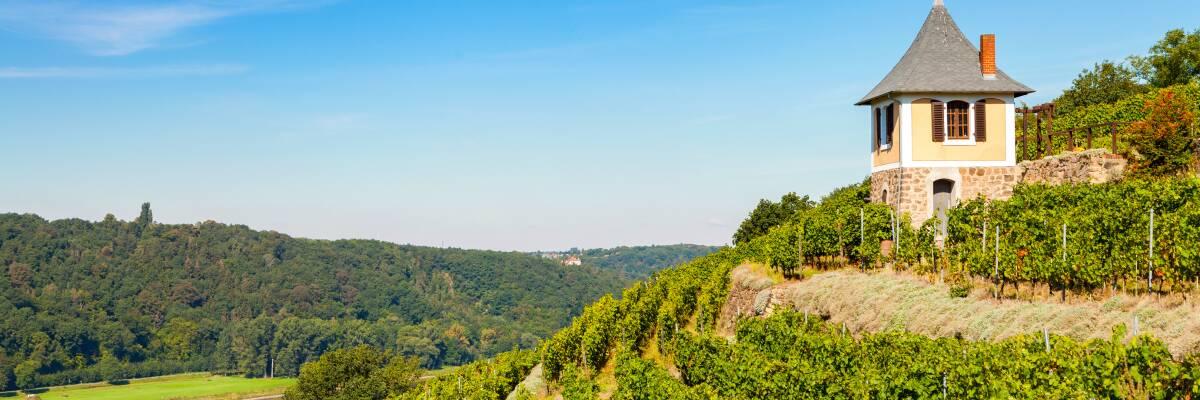 Wein aus Sachsen - feine Tropfen aus dem Elbtal