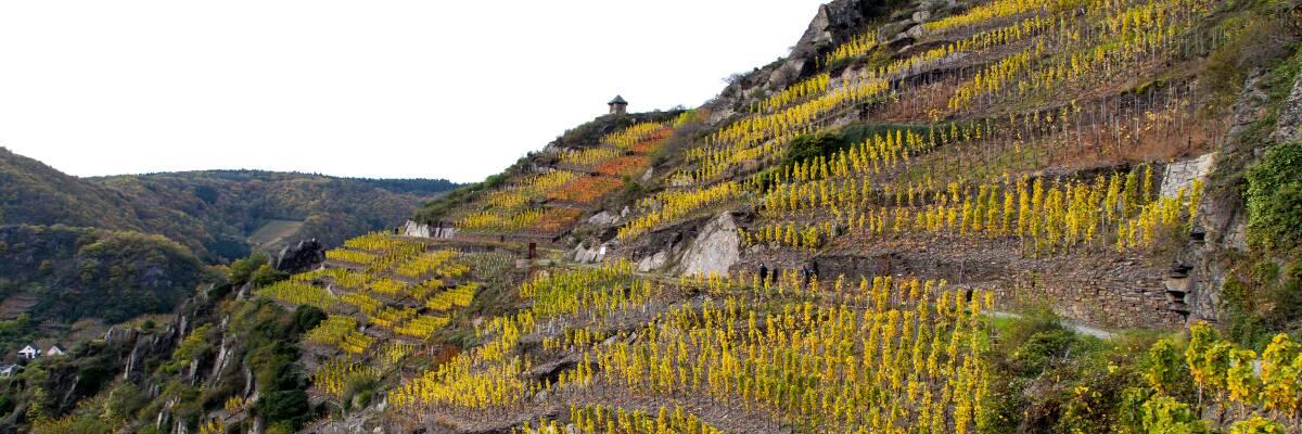 Wein aus extremen Lagen; Steilhangwein als besonderes Prädikat