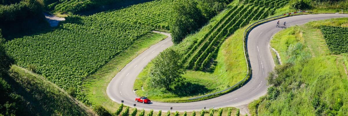 Die Deutsche Weinstraße und die Deutschen Weinstraßen