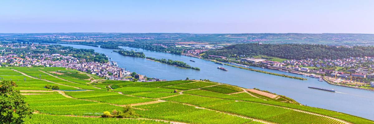 Wein aus Rheinhessen: Ein kurzer Überblick