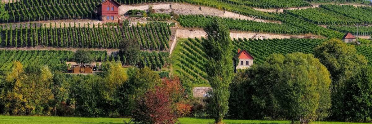 Wein aus Saale-Unstrut – Eleganz aus dem Norden